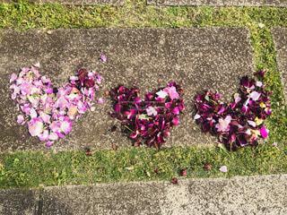 薔薇の花びらのハートマークの写真・画像素材[2263392]