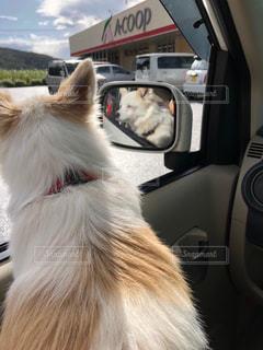 車の上に座っている犬の写真・画像素材[2281931]
