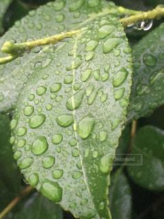 雨,緑,植物,水,葉,梅雨,雨の日