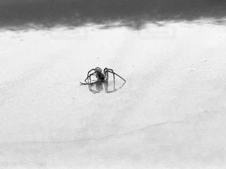 雨,クモ,梅雨,蜘蛛,雨の日,スパイダー