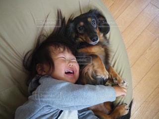 犬の写真・画像素材[2747896]