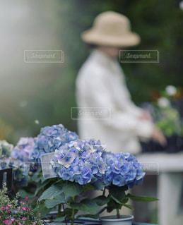 風景,花,雨,紫陽花,雨上がり,梅雨,6月,Bokeh,比叡山