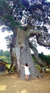 大木になるの写真・画像素材[2173877]