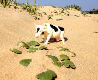 浜辺に座っている犬の写真・画像素材[2261309]