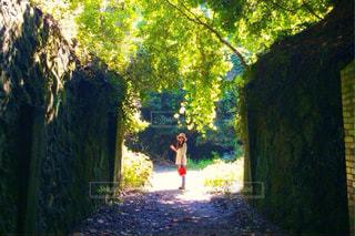 木の前に立っている人の写真・画像素材[2261319]