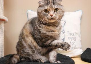 テーブルの上に座っている猫の写真・画像素材[2292173]