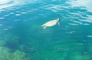 海で気持ちよく泳いでるカメさんの写真・画像素材[2332274]