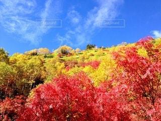 北アルプス焼岳の写真・画像素材[2597402]