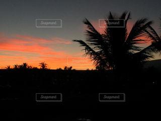 ハワイ島で朝日を浴びるの写真・画像素材[2427282]