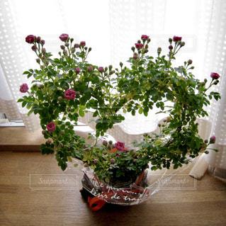 LOVE,フラワーアレンジメント,バラ,お花,薔薇,ハート,ラブ,母の日,♡,マーク