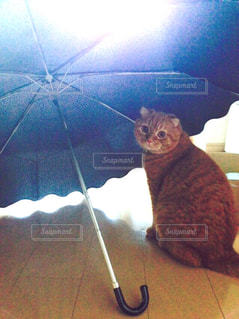 雨宿りする猫の写真・画像素材[2180117]