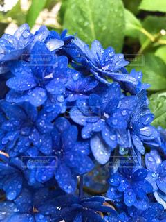 花,青,景色,草木