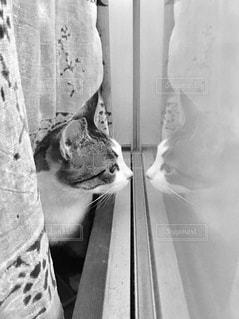 カメラを見ている猫の写真・画像素材[2194647]