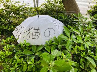 ネコのための傘の写真・画像素材[2200917]