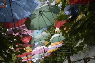 傘,葉,木陰,カラフル傘