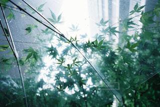 傘,屋外,水,もみじ,rain,雫,雨の日,フィルム写真