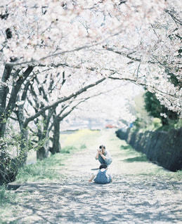 桜並木の写真・画像素材[2382931]