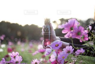 花の写真・画像素材[2611477]