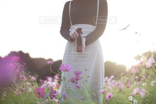 花の写真・画像素材[2611520]