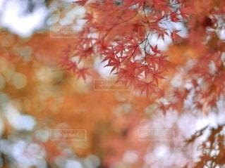 木の近くでの写真・画像素材[2792109]