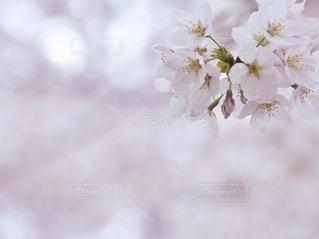 花をクローズアップするの写真・画像素材[2792111]
