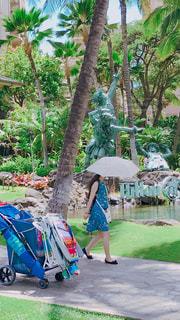 風景,傘,人物,人,ハワイ