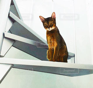 カメラを見ている猫の写真・画像素材[2182502]