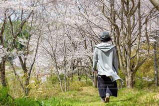 女性,桜,屋外,後ろ姿,散歩,レジャー,お散歩,ライフスタイル,おでかけ