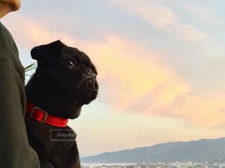 カメラを見ている犬の写真・画像素材[2708651]
