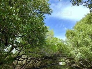 木と水の回廊の写真・画像素材[2212075]