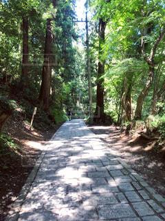 森の中の道の写真・画像素材[2211206]