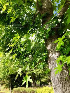 風景,空,公園,屋外,緑,階段,青空,散歩,葉,山,景色,光,樹木,並木道,野外,日陰,おでかけ,日向,草木,お出かけ