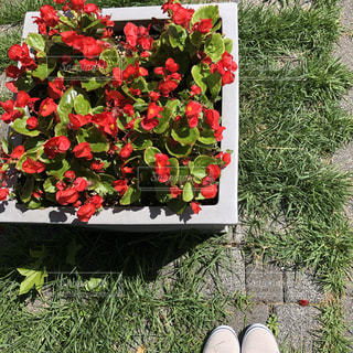 花,街角,靴,屋外,緑,植物,白,晴れ,散歩,道路,赤い花,草,植木鉢,道端,プランター,花壇,歩道,野外,道ばた,お散歩,四角,日向,草木,お出かけ,ひなた,晴れた日,白い靴