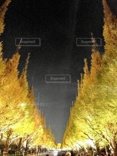 ライトアップされた銀杏の写真・画像素材[2601532]
