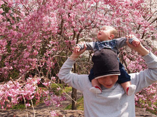 桜,親子,お花見,笑顔,肩車,赤ちゃん,パパ,息子,父の日,あかちゃん,さくら