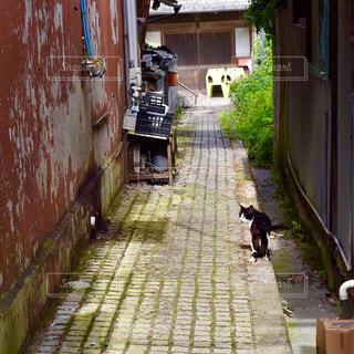 猫,屋外,散歩,町並み,おでかけ