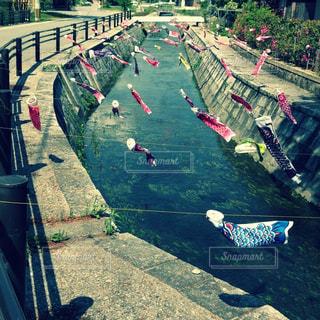 川で泳ぐ小さな鯉のぼりの写真・画像素材[2202688]