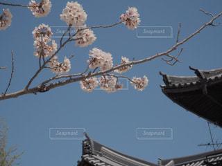 枝に座っている鳥の群れの写真・画像素材[2265216]
