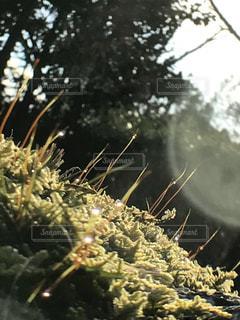 木の隣に座っているブロッコリーの山の写真・画像素材[2265572]
