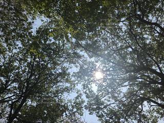 木のクローズアップの写真・画像素材[2265588]