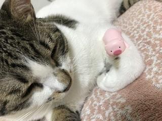 ベッドに横たわる猫のクローズアップの写真・画像素材[2273536]