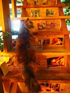 階段を登る猫の写真・画像素材[2273559]
