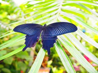 木の上に座っている蝶の写真・画像素材[2273573]