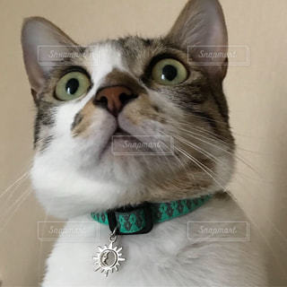 緑色の目をした猫のクローズアップの写真・画像素材[2302014]