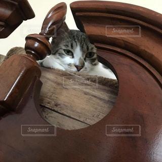 ボウルに座っている猫の写真・画像素材[2303422]