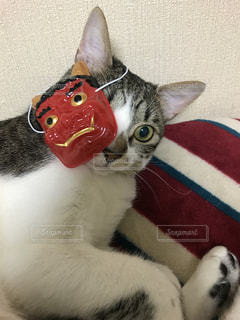 横になってカメラを見ている猫の写真・画像素材[2303436]