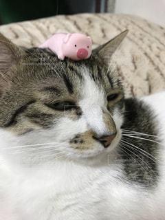 猫のクローズアップの写真・画像素材[2303456]