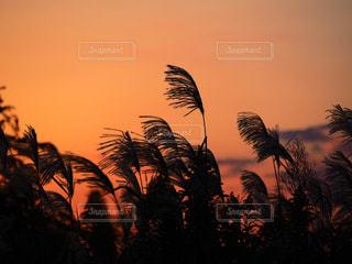 ススキと秋の空の写真・画像素材[2412744]
