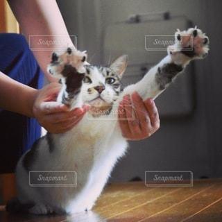 猫とリラックスの写真・画像素材[3396865]