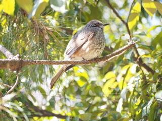 鳥,野生動物,屋外,樹木,座る,野鳥